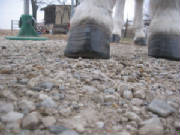 Festus' right front hoof